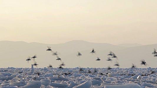 Thumbnail for Frozen Sea Gulls 5