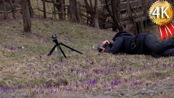 Photographer Making Photos of Snowdrops