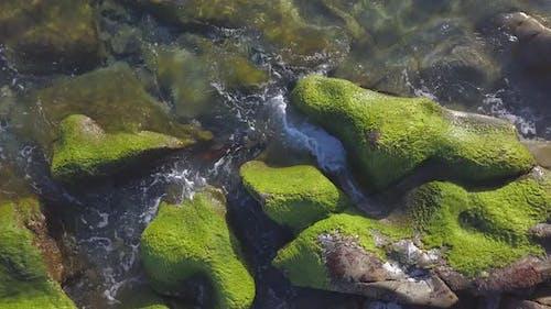 Seaweed on Rocks