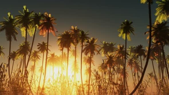 Sun Beams Through Trees 5