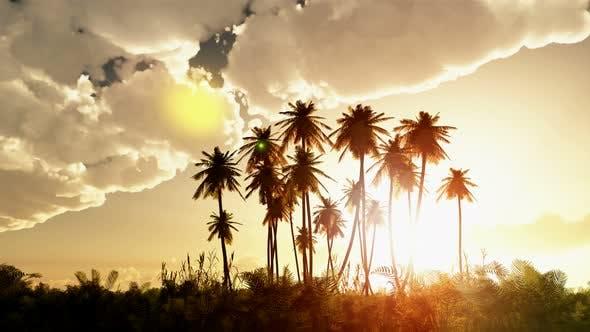 Thumbnail for palms bei sonnenuntergang mit wolken 8