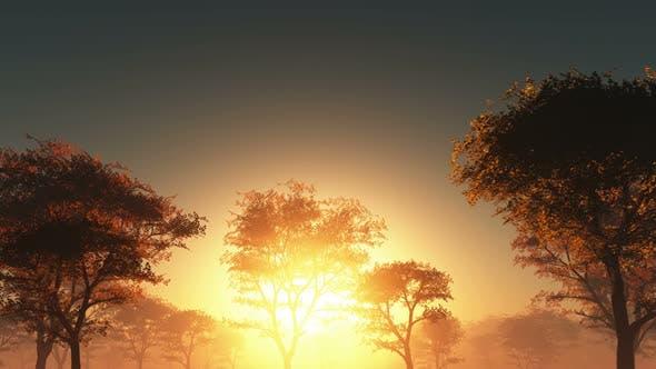 Thumbnail for Sun Beams Through Trees 12
