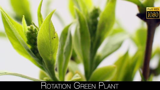 Thumbnail for Rotation Green Plant 2
