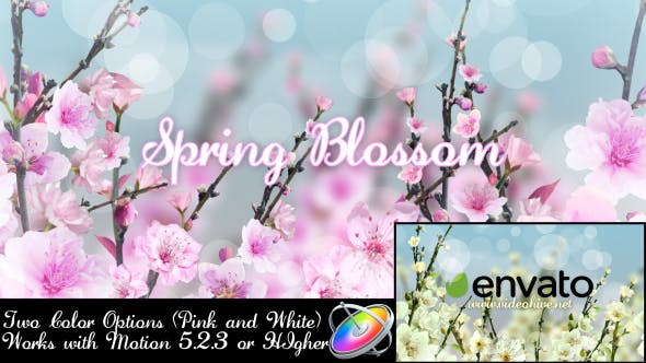 Thumbnail for Spring Blossom - Apple Motion