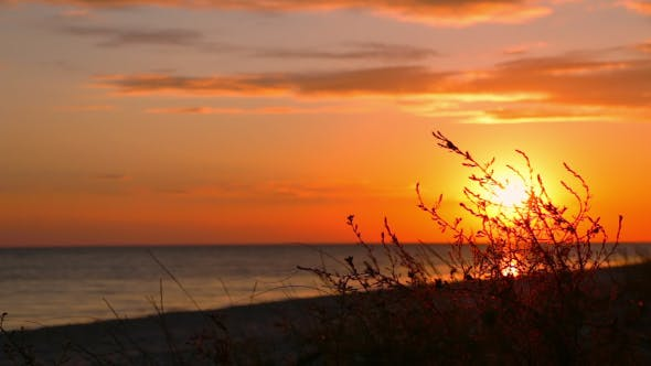 Thumbnail for Sunset on the Beach and Grass