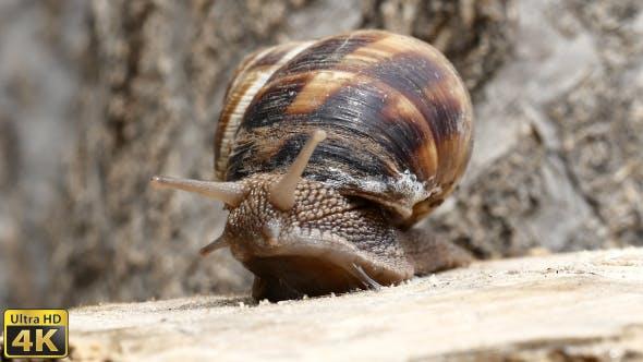 Thumbnail for Snail Movement