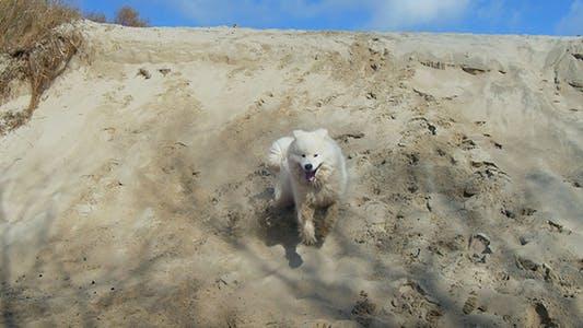 Thumbnail for Running Dog