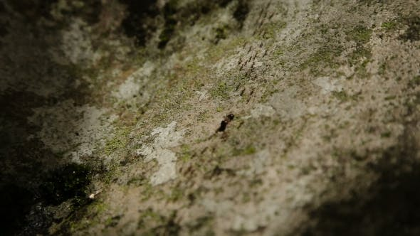 Thumbnail for Many Ants Move The Stone