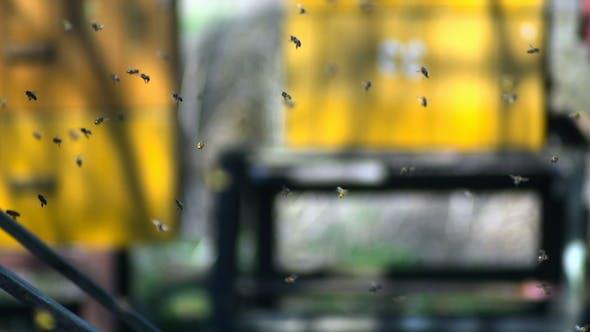 Thumbnail for Honey Bees 2