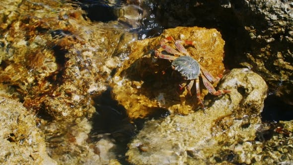 Thumbnail for Great Crab Crawling On The Rocks, There Is Something Claws