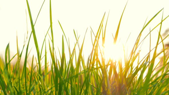 Thumbnail for Fresh Grass And The Sun