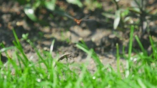 Red Dragonfly Flutter
