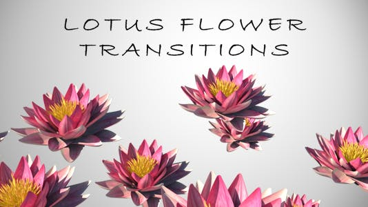 Lotus Flower Transition