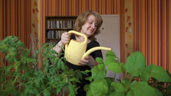 Thumbnail for Happy Mature Female Gardener Watering Sprouts At Home