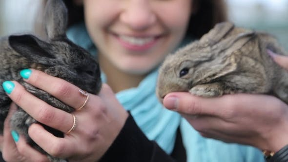 Thumbnail for Men And Girl Holding Rabbits In Hands
