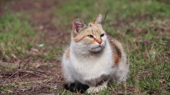 Thumbnail for Homeless Cat On The Street