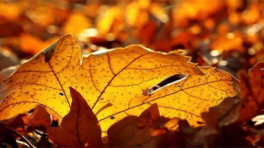 Thumbnail for Autumn Foliage - Timelapse