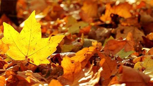 Thumbnail for Autumn Foliage