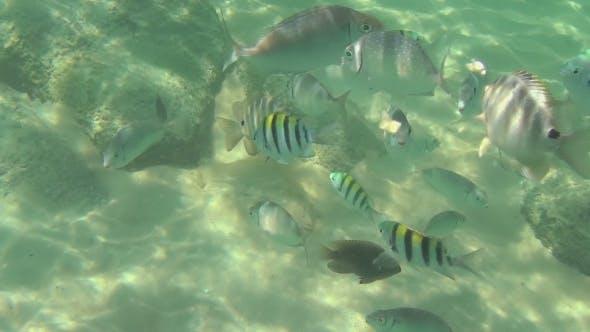 Thumbnail for Tropical Fish Eat Banana Slices