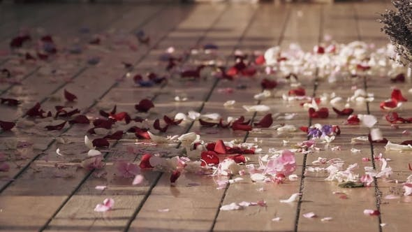 Thumbnail for Wind Get Up Beautiful Petals Of Rose Flowers On Street. White And Red. Summer Sunny Day. Warm Shades