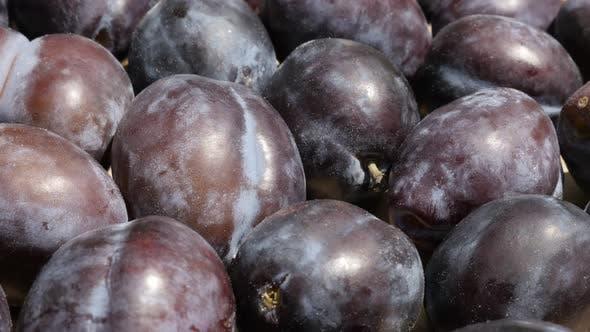 Thumbnail for Tilting over plum fruit from genus Prunus 4K video