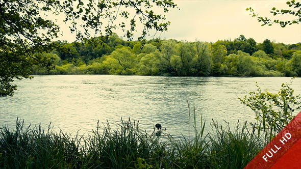 Thumbnail for Bird and River Flowing