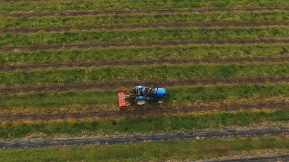 Thumbnail for Tractor in Agricultural Field 4k