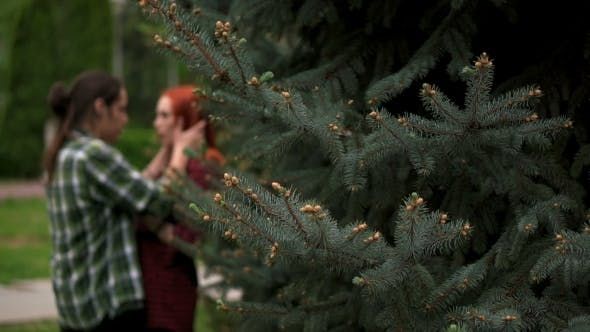 Cover Image for Happy Couple In Summer Park Among Spruces In Bokeh