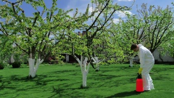 Gärtner Vorbereitung Bäume mit Dünger sprühen