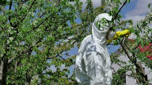 Man Spraying Insecticide On Trees