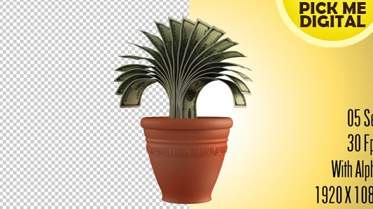 Cover Image for Money Plant
