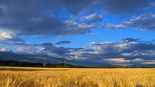 Thumbnail for Wheat Field and Blue Sky