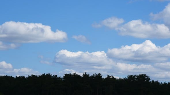 Thumbnail for Beautiful White Fluffy Clouds Over Coniferous Forest On Sunny Day