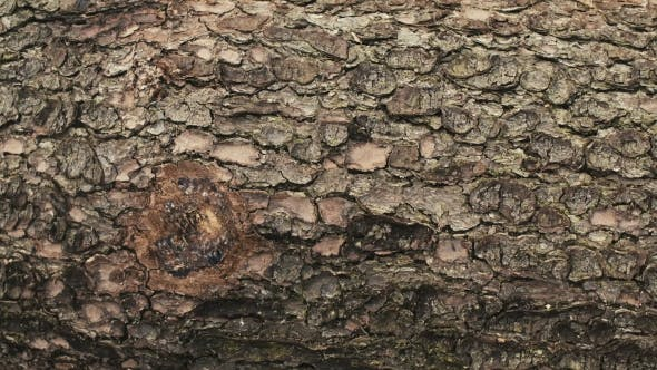 Thumbnail for Shot Of Tree Bark. Wood industry - Nature.