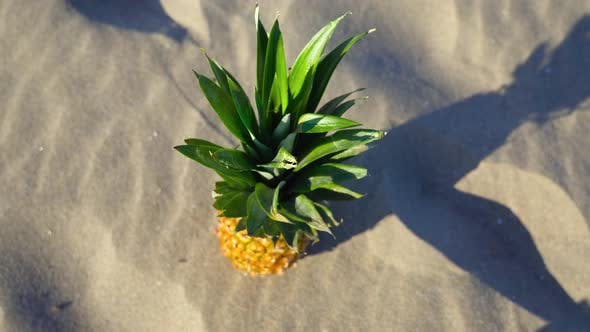 Pineapple Resting on the Sand with Summer Light