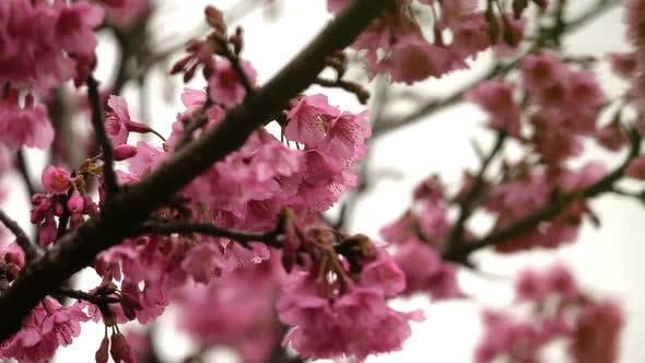 Thumbnail for Pink Flower