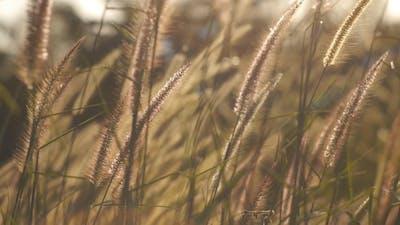 Grass Wind