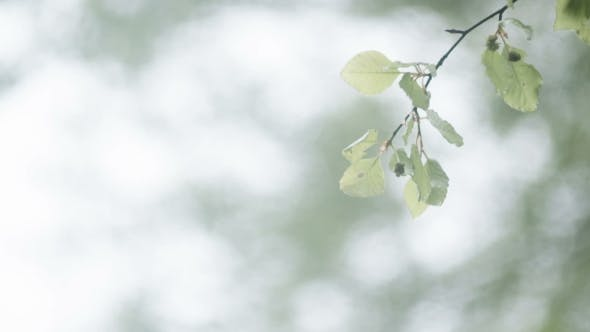 Thumbnail for Wind Blowing Vibrant Leaves