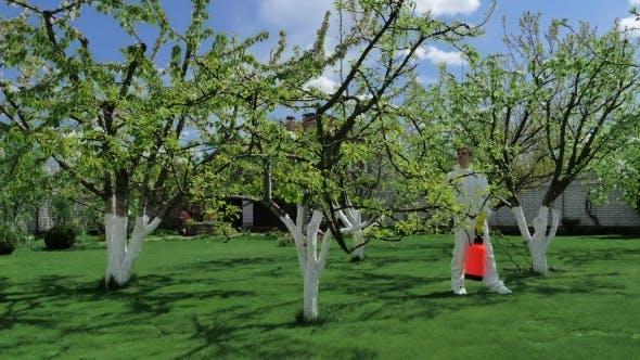Mann Spritzen Chemikalien im Garten Obstgarten