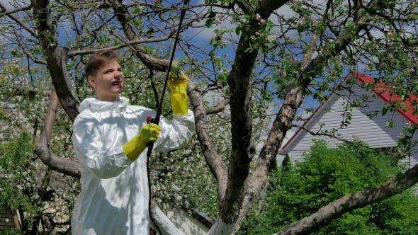 Man Spraying Trees From Pests