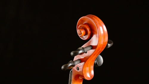 Violin Scroll Gyrating