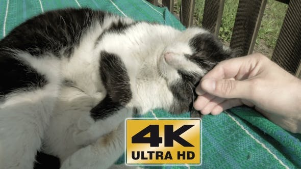 Thumbnail for Petting Caressing And Fondling a Cat