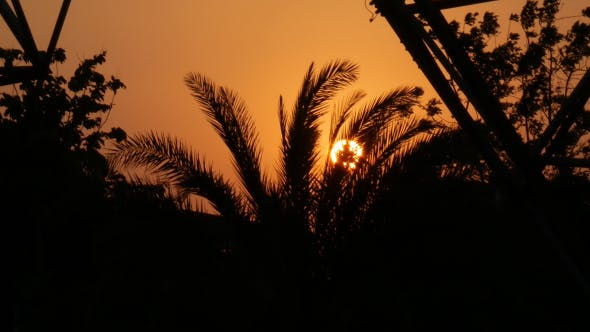 Thumbnail for Sunset with Palm Trees