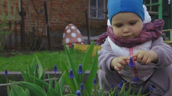 Little Baby Girl Smells a Blue Flower