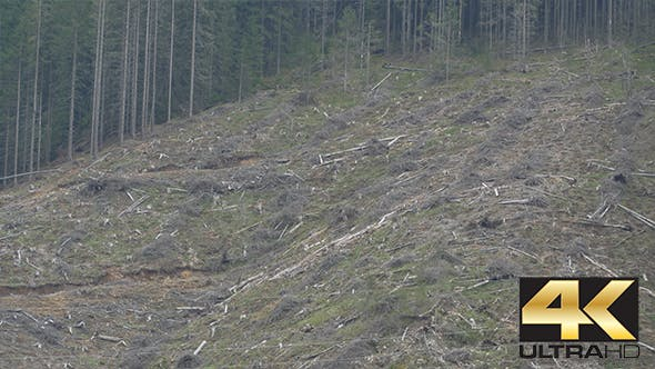Thumbnail for Deforestation on Mountain Slope