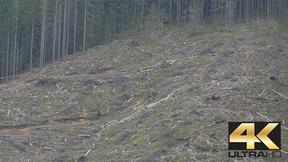 Cover Image for Deforestation on Mountain Slope