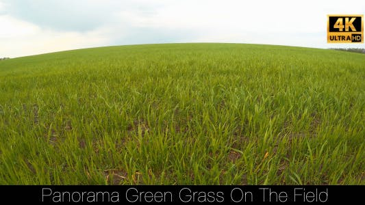 Thumbnail for Panorama Green Grass On The Field 2