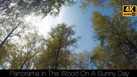 Thumbnail for Panorama In The Wood On A Sunny Day