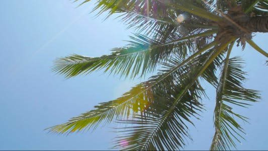Cover Image for Sun Shining Through Palm Leaves