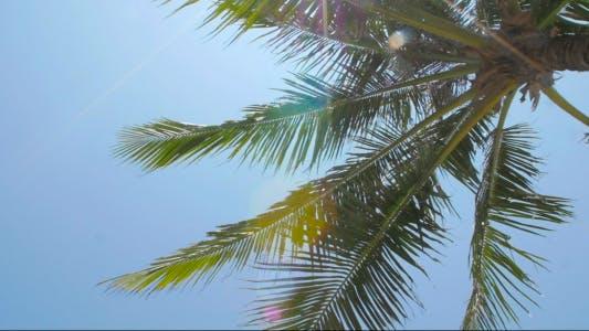 Thumbnail for Sun Shining Through Palm Leaves